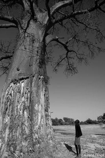 botswana_nb_baobab_kesaobaka_1_bis