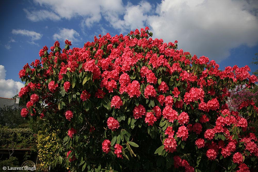 Notre jardin de Crozon © Laurent Dingli - Tous droits réservés