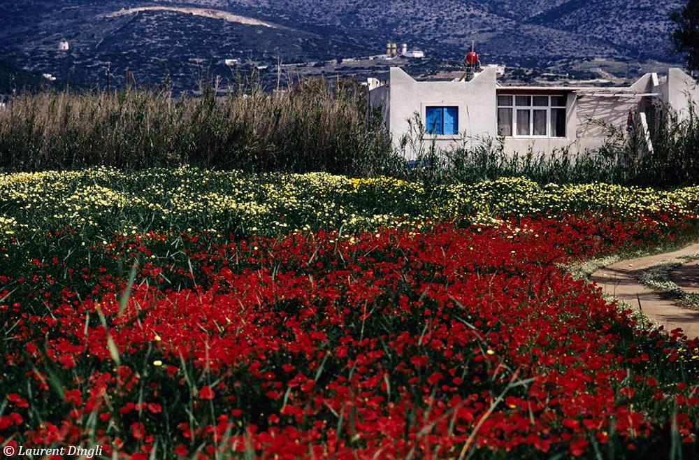 Grèce 14