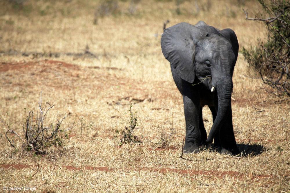 botswana_elephant_29
